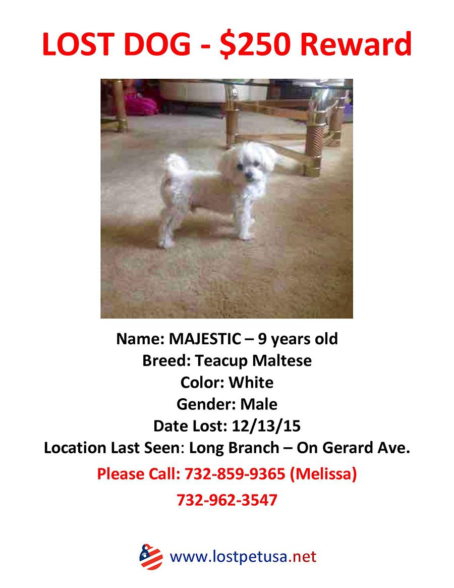 Majestic 12 - Lost & Found