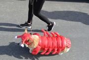 lobster dog0897
